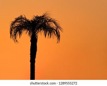 Dusk sky and palm tree