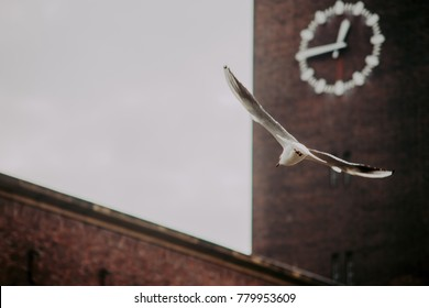 Dusseldorf, Germany: Seagull flying in front of the brick wall with clock on a cloudy day