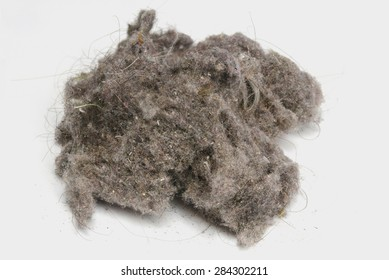 Dust ball over a white background. House dust can produce allergies. Dust bunny
