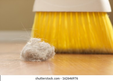 Dust Bunny and a broom