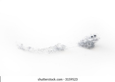 Dust bunny on a white background