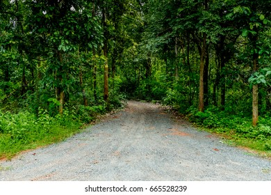 Dust country road with green trees to the jungle