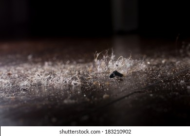 dust dirt and crumbles on the hardwood floor