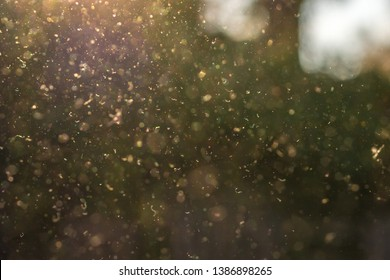 Dust, pollen and small particles fly through the air in the sunshine.
