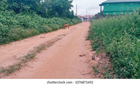 Dusty road with Brown goat and plants
