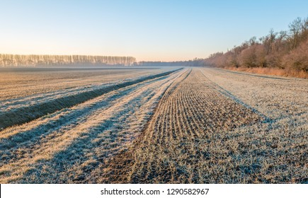 Dutch agricultural area with winter wheat sown in rows and a ditch in the morning sun on a winter day. The leaves and the grass blades along the ditch are covered with a thin layer of rime.