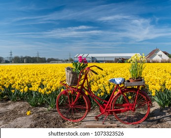 Dutch bicycle for the Tulip field. Place Lisse, The Netherlands