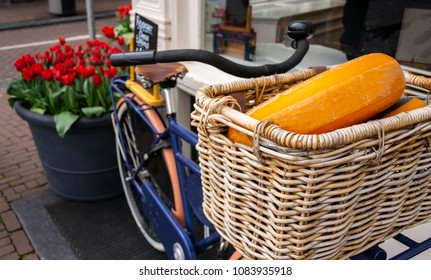 Dutch cheese wheels in bicycle basket with beautiful red tulips in background
