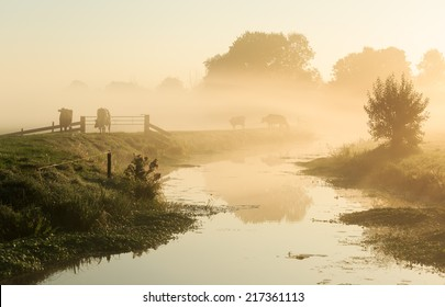 Dutch countryside: cows on a dike of a small river in during a foggy sunrise.