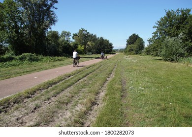 Dutch cycle path to the dunes and forest with cyclists and a dog. Wheel tracks on the roadside in the grass. Summer, August, Netherlands, near the village of Bergen.