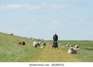 Dutch dike with sheep and man with dog car and bike at the wadden island Terschelling