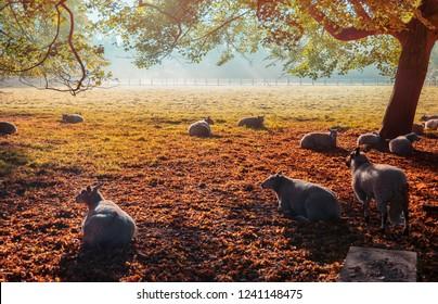 Dutch ecological farm , autumn morning
