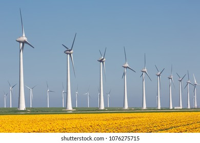 Dutch farmland with yellow tulip field and big wind turbines