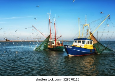 Dutch Fishing trawlers surrounded by seagulls