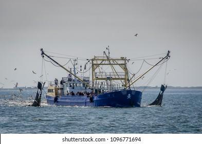 Dutch fishingboat fishing for shrimps in the Waddensea