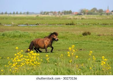 Dutch flat landscape with pony in the grass fields