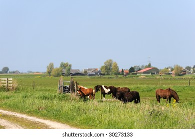 Dutch flat landscape with ponys in the grass fields