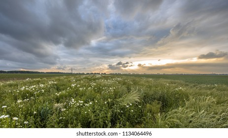 Dutch flat open countryside with white daisy flowers in Groningen province under spectacular sky
