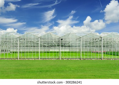 Dutch greenhouse