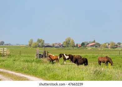 Dutch landscape with horses in the fields
