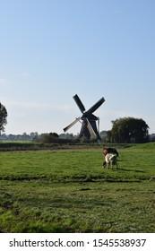 Dutch landscape near amsterdam with dutch wind mill