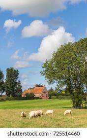 Dutch landscape with sheep near the village of Wetsinge, Netherlands