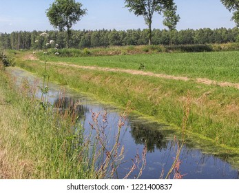 Dutch landscape in summer with grass and water
