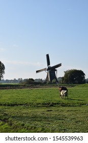 dutch landscape with wind mill located near amsterdam