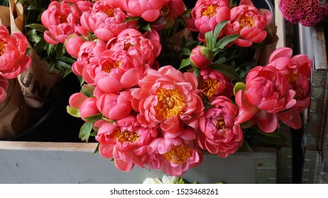Dutch masters style pink flowers