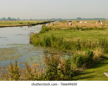 Dutch meadow Landscape with cows and a ditch at Nijkerk, Gelderland, Holland, NLD