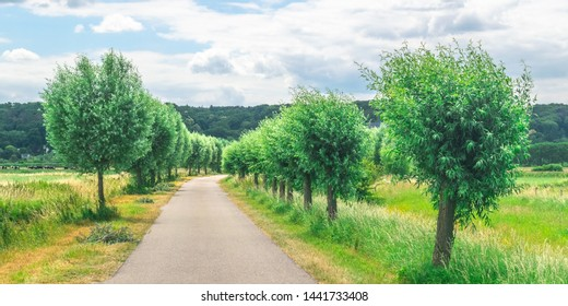 Dutch meadow panoramic landscape. Cobblestone road going through the pastures or green juice grass. Beautiful trees standing next to road in the Netherlands. Remembering the Europe travel