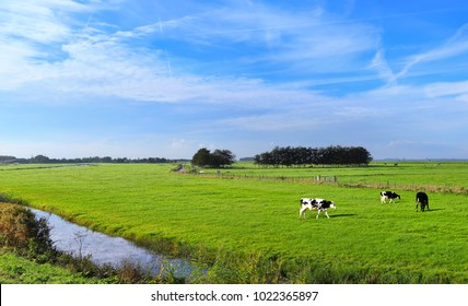 Dutch meadow panoramic landscape with traditional water canals. Pastures of green juicy grass. Dutch breed cows and sheep grazing. Netherlands. Remembering the Europe travel