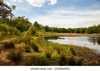 Dutch nature, a lake or fen surrounded by trees and greenery at the Leenderheide in Eindhoven on a very sunny day with a blue sky horizontal