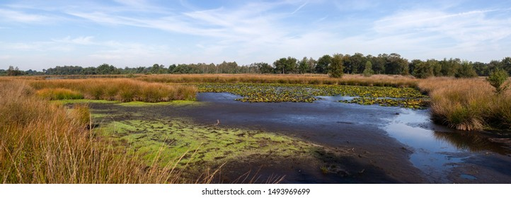 Dutch nature landscape with dry lake