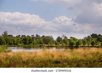 Dutch nature landscape with fen at Kampina near Boxtel in Noord Brabant