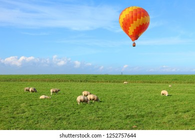Dutch pastoral green field landscape and hot air balloons flying over the farmlands in the blue sky. Holland sheep on pasture meadow. Netherlands