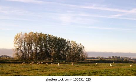 Dutch polder in early morning, Biesbosch National Park, Netherlands