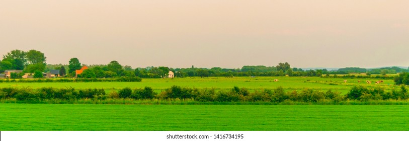 Dutch polder landscape with cows walking on it, The photo was taken in the province of Gelderland at the beginning of the spring.