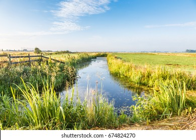 Dutch polder landscape during sunrise with canals with riparian plants, meadows  and flowering herbs against clear blue sky with clouds veil