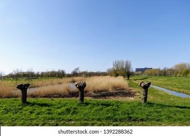 Dutch polder landscape near Rijswijk, South Holland, Netherlands, springtime cut trees, dry grass, green grass, canal, water, blue sky