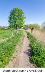 Dutch portrait landscape with a small trail, pollard willow and a oak tree along a dyke