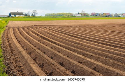 Dutch rural landscape with clay potato ridges in the foreground.  The seed potatoes have just been planted. The photo was taken in the spring season near the village of Almkerk, North Brabant.