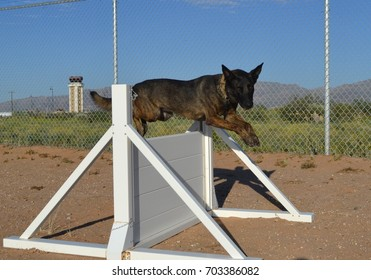 Dutch Shepherd Military Working Dog Jumps Over an Obstacle
