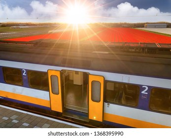 Dutch Sprinter train with doors open and tulips in the background