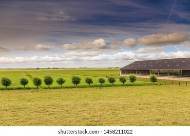 Dutch summery polder landscape at Wassenaarsche Polder with a tight row of pollard willows with grown branches and cow barn against  background of typical Dutch cloudy sky