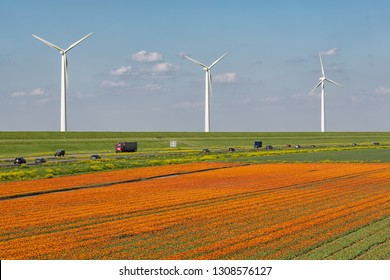 Dutch tulip field along highway A6 between Lelystad and Emmeloord