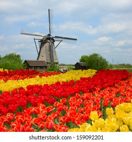 dutch windmill over rows of tulips field , Holland