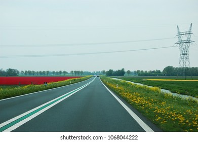 Dutch yellow and red bulb fields with high-voltage mast along a road with rapeseed in the verges in North Holland.