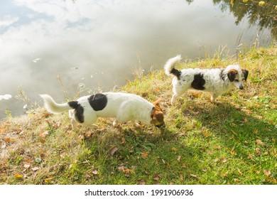 Dwa psy spacerujące brzegiem jeziora