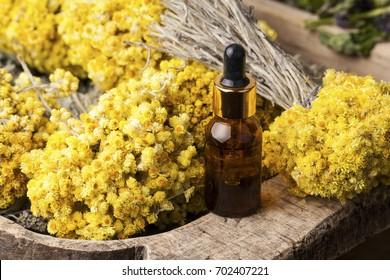 Dwarf everlast (Helichrysum arenarium) flowers and aroma oil